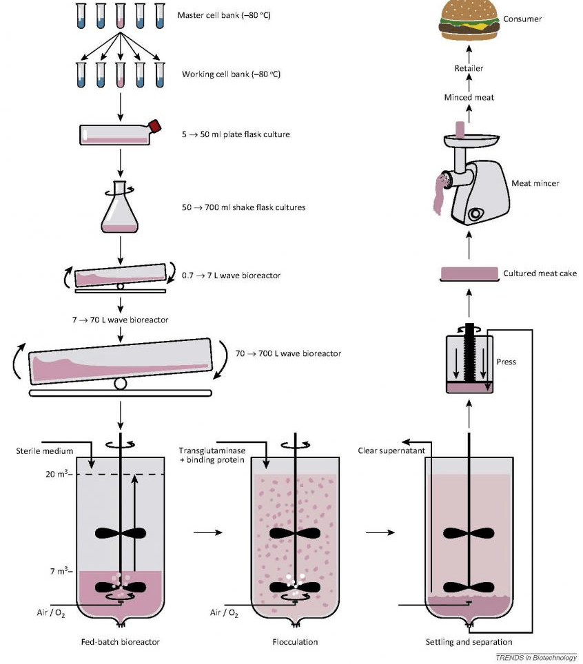 How to Grow Lab Meat