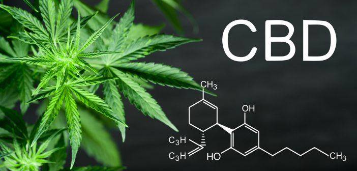 CBD Leaf